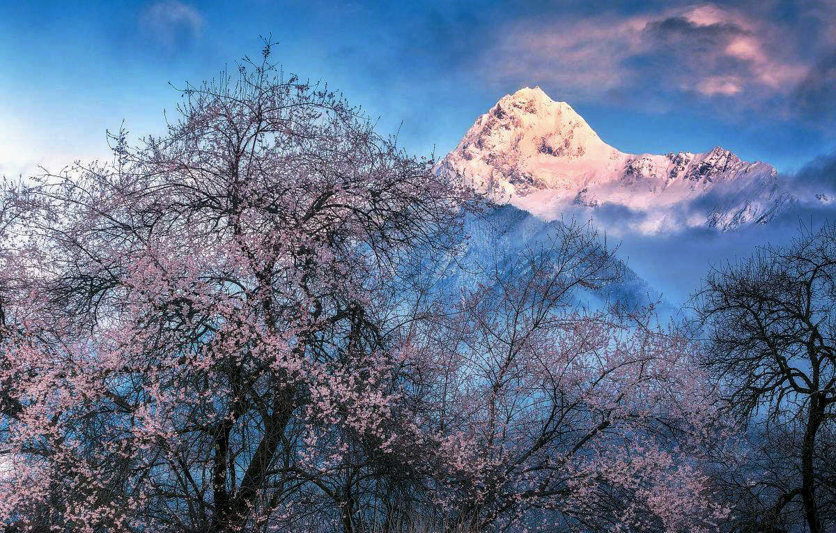 春秋桃花风景图片